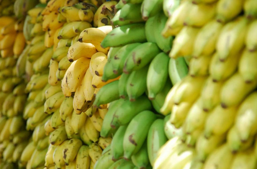 Bananas in West Africa