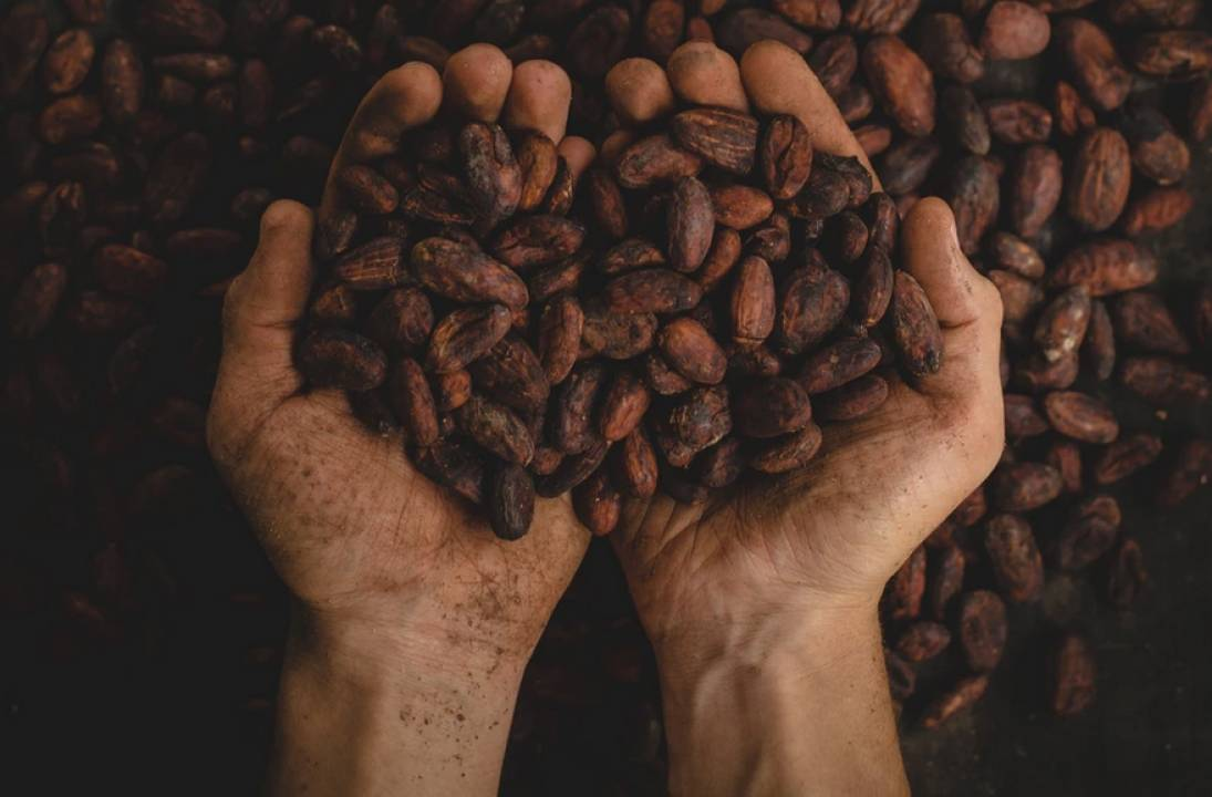 Ivory Coast looking to sell 100,000 tonnes of cocoa